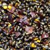 BaitZone Chilli Hemp - Ziarna konopi z domieszką chilli 1,5L