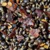 BaitZone Chilli Hemp - Ziarna konopi z domieszką chilli 3L